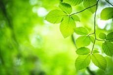 Bartsch_Nachhaltigkeit